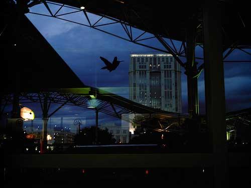 birdslon2.jpg