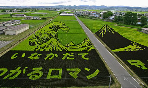 rice_art1.jpg